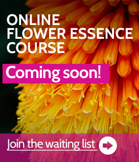 Online flower essence training