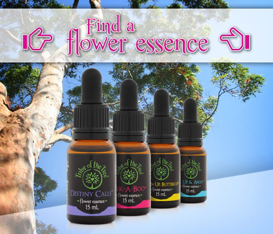 Find a flower essence from Tribe of the Tree