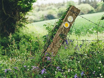 A boundary fence is falling down, surrounded by weeds and wildflowers