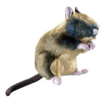 Wildlife Rat
