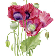 BS77413 - Poppies (6 blank cards)