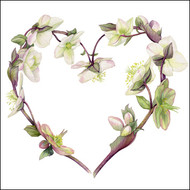 BS77424 - Hellebore Heart (6 blank cards)