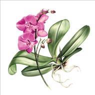 BS77855 - Pink Orchid (6 blank cards)