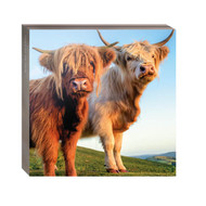 WAL11101 - Down on the Farm Notecard Wallet (6 wallets)