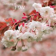 SM14189Y - Cherry Blossom (6 thinking of you cards)
