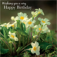 SM14208HB - Primroses (6 birthday cards)