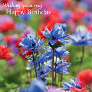 SM14213HB - Anemones (6 birthday cards)