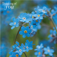 SM14220Y - Forget-me-nots (6 thinking of you cards)