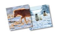 CX14069 - Pony & Sheep (6 Christmas packs)