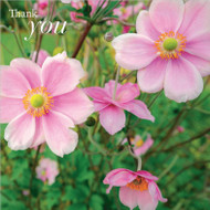 SM14233T - Japanese Anemones (6 thank you cards)