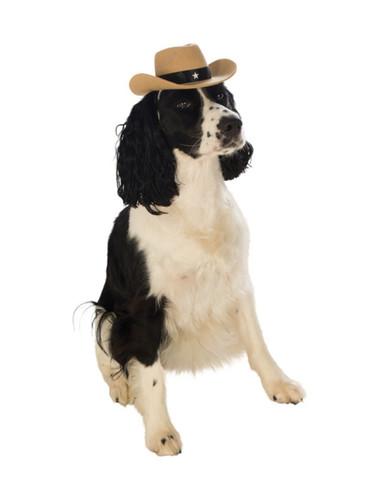Brown Felt Cowgirl Cowboy Star Sherriff Hat For Pet Dog
