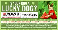 DOG TRAINING BUSINESS ADVERTISEMENT