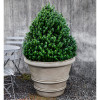 Classic Rolled Rim Planter (Glass Fiber Reinforced Concrete in Verde Finish)