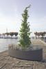 Plantship Container - Material : Fiber Cement - Finish : Anthracite
