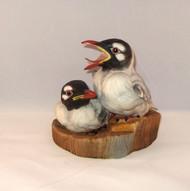 Bonaparte's Gulls 200-18