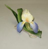 """Boehm """"Classic Beauty Iris"""" F556C"""