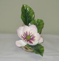 Magnolia Parviflora Watsonii 300-31C
