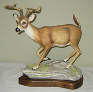 White-Tail Buck 50026C