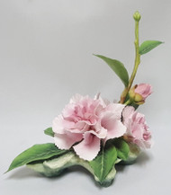 "Connoisseur Of Malvern ""Camellia Hawaii"""