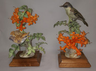 "Dorothy Doughty ""Phoebes & Flame Vine"" (Pair)"