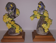 "Dorothy Doughty ""Audubon Warblers"" (Pair)"