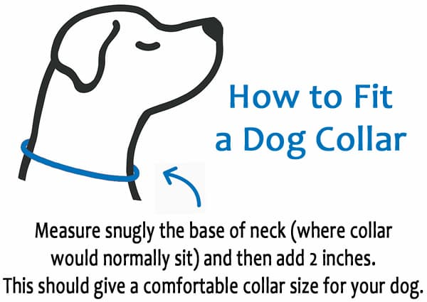 how-to-fit-a-dog-collar1.jpg