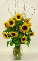 Sunflower Sensation (Premium)