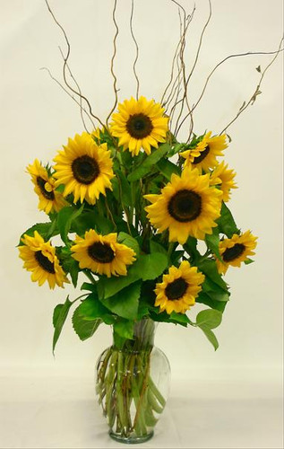 Sunflower Sensation (Premium)