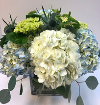 Enjoy these beautiful hydrangea with out a long drive to the Cape!