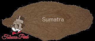 tp-wrapper-sumatra.png