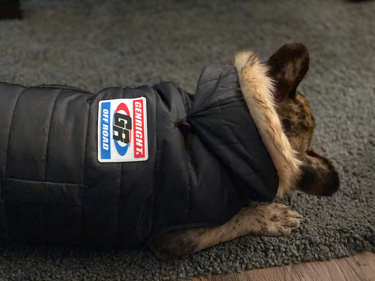 Shown here on a dog jacket