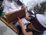 Open Hive Days with Master Beekeepers