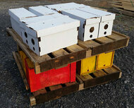 Live Honey Bees, 5 Frame Nuc, Spring 2021