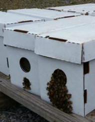 Live Bees & 8 Frame Complete Beginner Hive Kit, Assembled