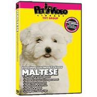 Maltese Everything You Should Know! Dog & Puppy Training Bonus - DD577724