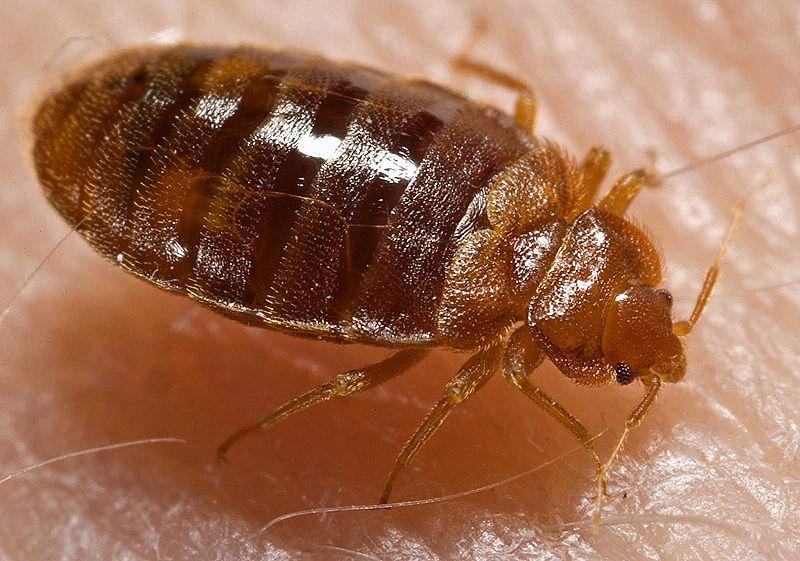Bed Bug Proof Encasements