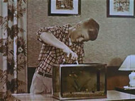 Aquarium Wonderland (1955) on DVD