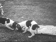 Adventuring Pups (1948) on DVD