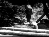 Flatboatmen Of The Frontier (1941) on DVD