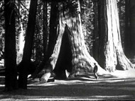 Let's See Yosemite (1933) on DVD