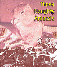Those Naughty Animals DVD