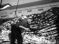 San Francisco Dead Whale Opens Seafood Season (1950s) on DVD