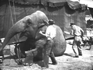 Circus Animals (1947) on DVD