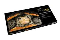 Diamondback Terrapin Puzzle - National Geographic Photo Ark