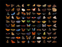 Butterflies Puzzle - National Geographic Photo Ark