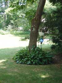 my-hosta-garden.jpg