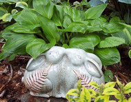 'Obsession' Hosta Courtesy of Carol Brashear