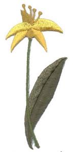 Ov8932 - Daffodils