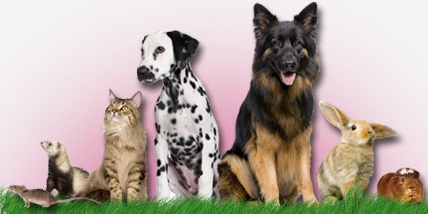 animal-supplements-banner.png