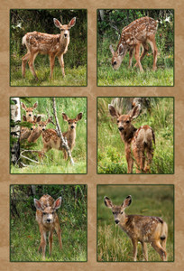 SIX MULE DEER FAWNS QUILT PANEL